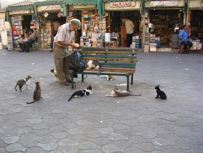 A man is feeding cats on the street in the Middle East