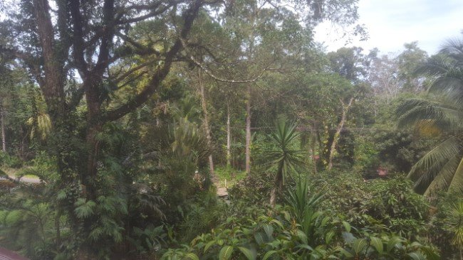Overcoming cultural differences : Jungle view shot near Puerto Viejo, Costa Rica